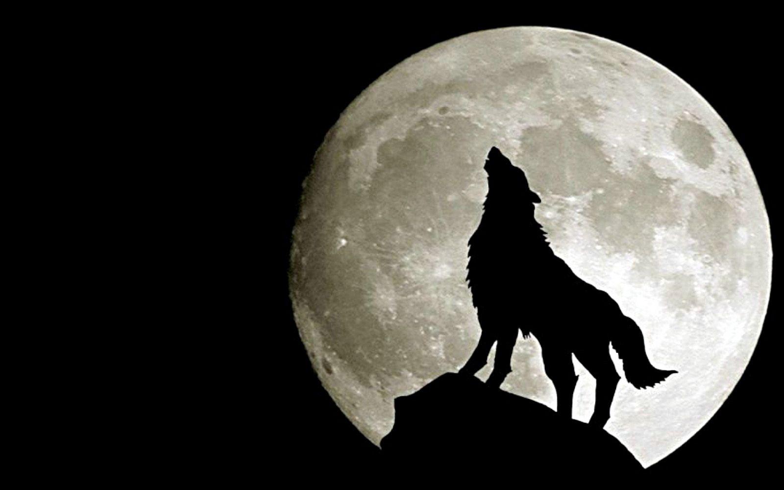 Wolf Under Full Moon Desktop Wallpaper Backgrounds Wolf