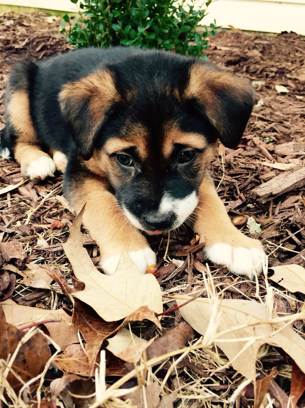 What S The Best Breed Of Dog That Suits Your Family Best Hunde Niedliche Tierbabys Hundebabys