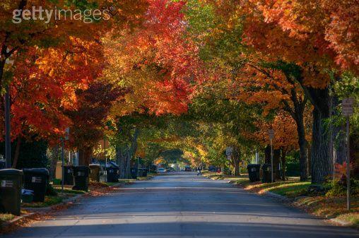 Autumn Tree Avenue Norman Oklahoma Scenic Routes Scenic Byway Scenic