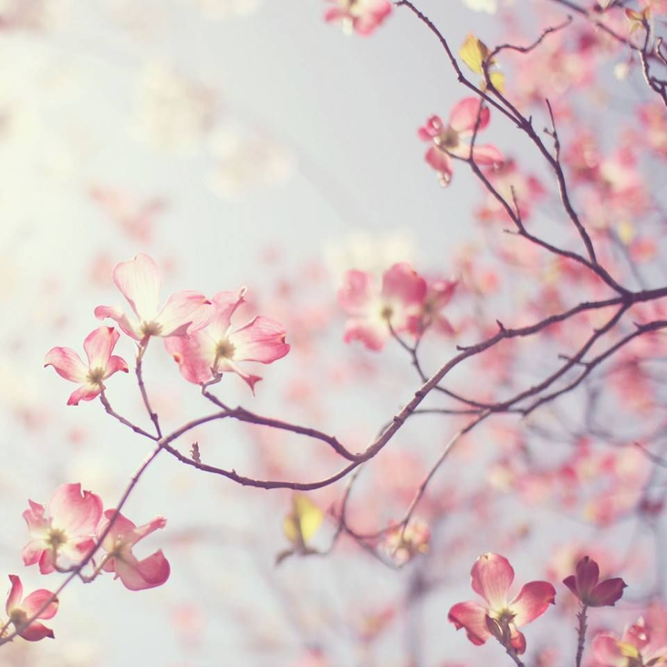 The color of #spring Pink of course!   CHUCHERIAS   Pinterest ...