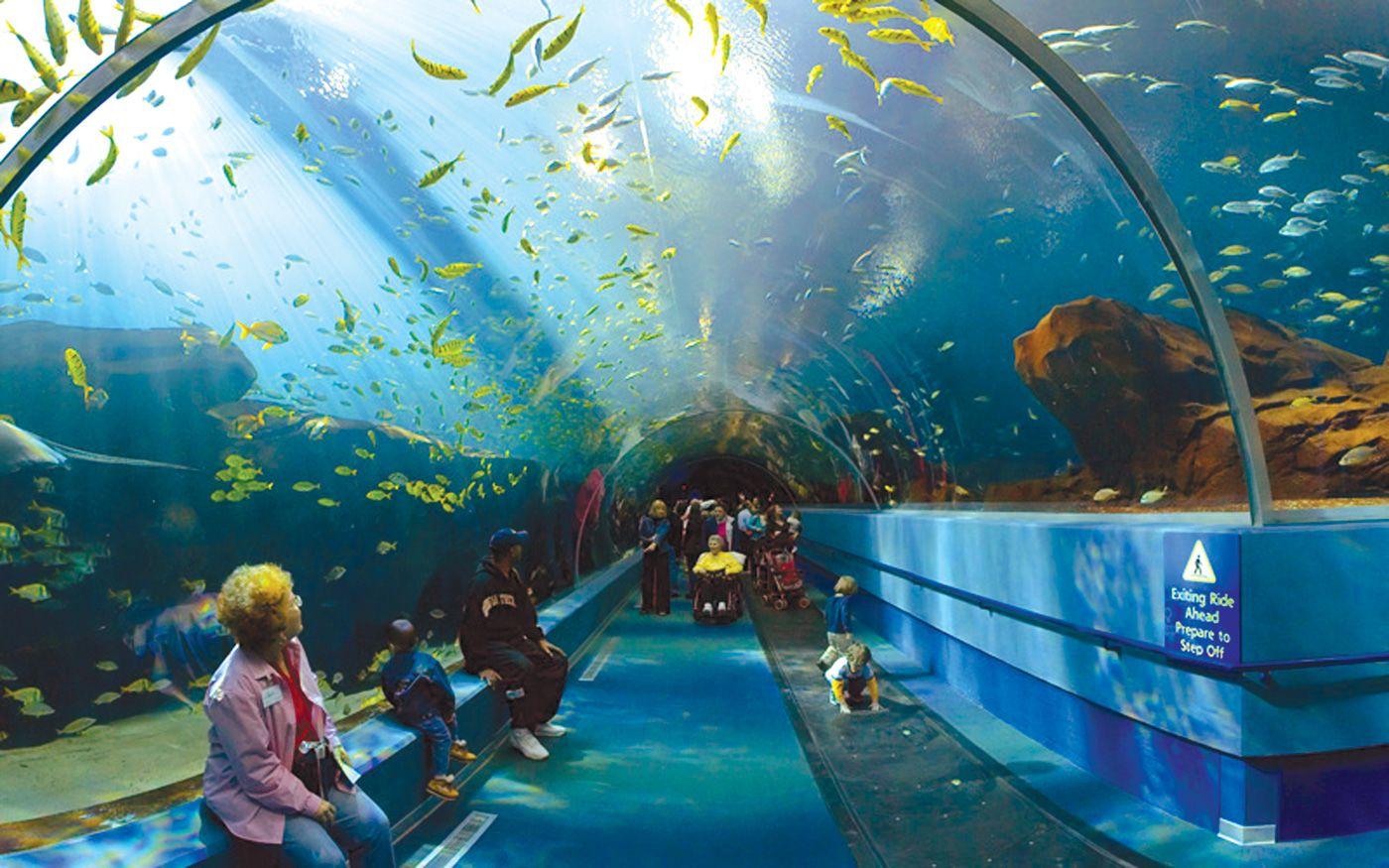 Shedd Aquarium - [Chicago, IL] - Museum Campus | Georgia aquarium ...