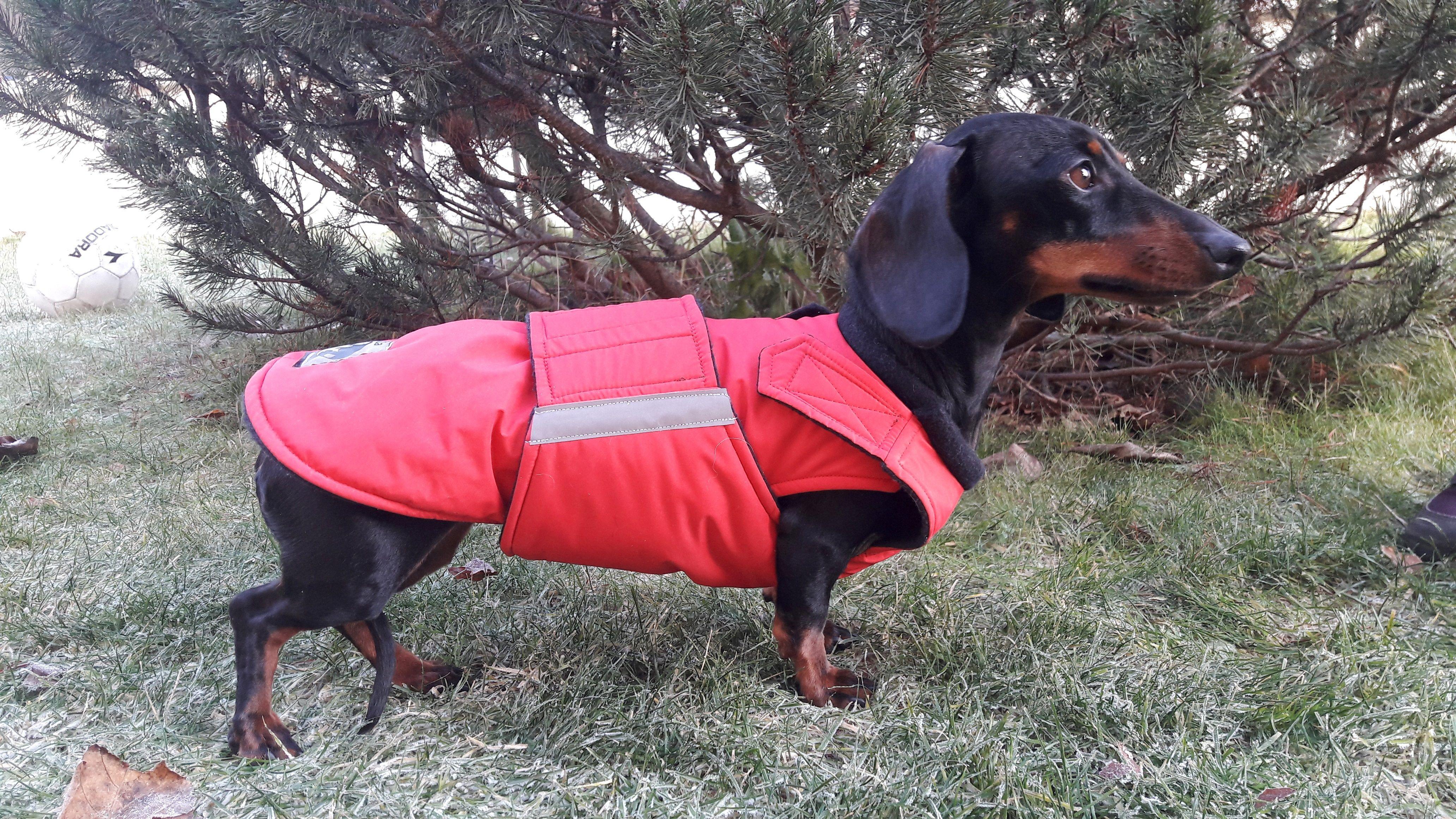 Dachshund Winter Dog Coat By Pepper Petwear Www Pepperpetwear Com