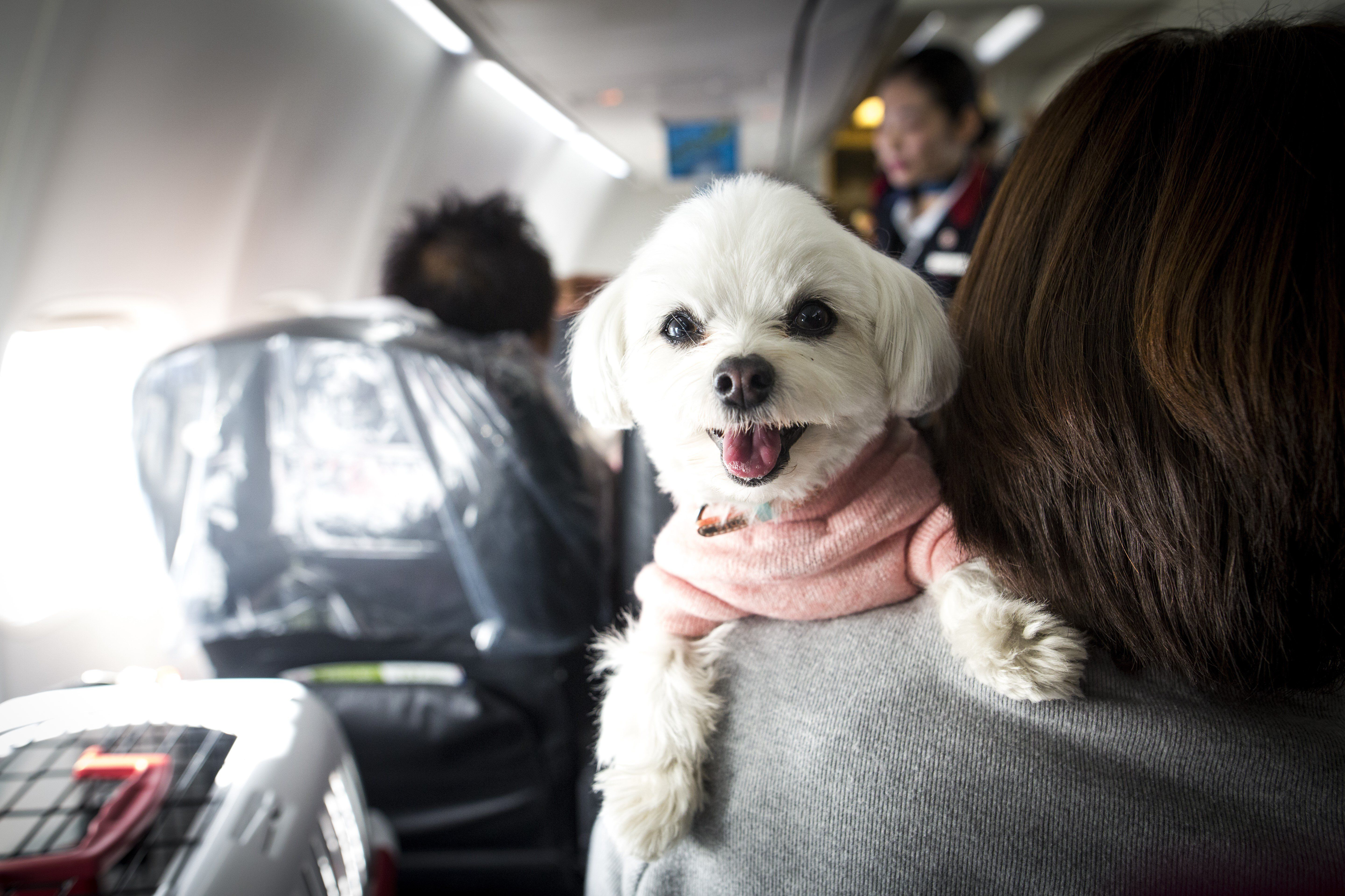 What You Should Know About Traveling With Pets and Keeping