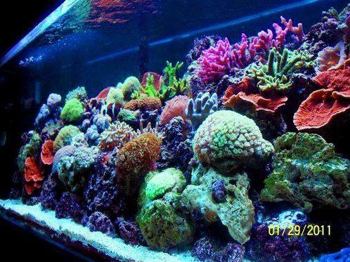 Top 10 Reef Tanks Rate My Fish Tank