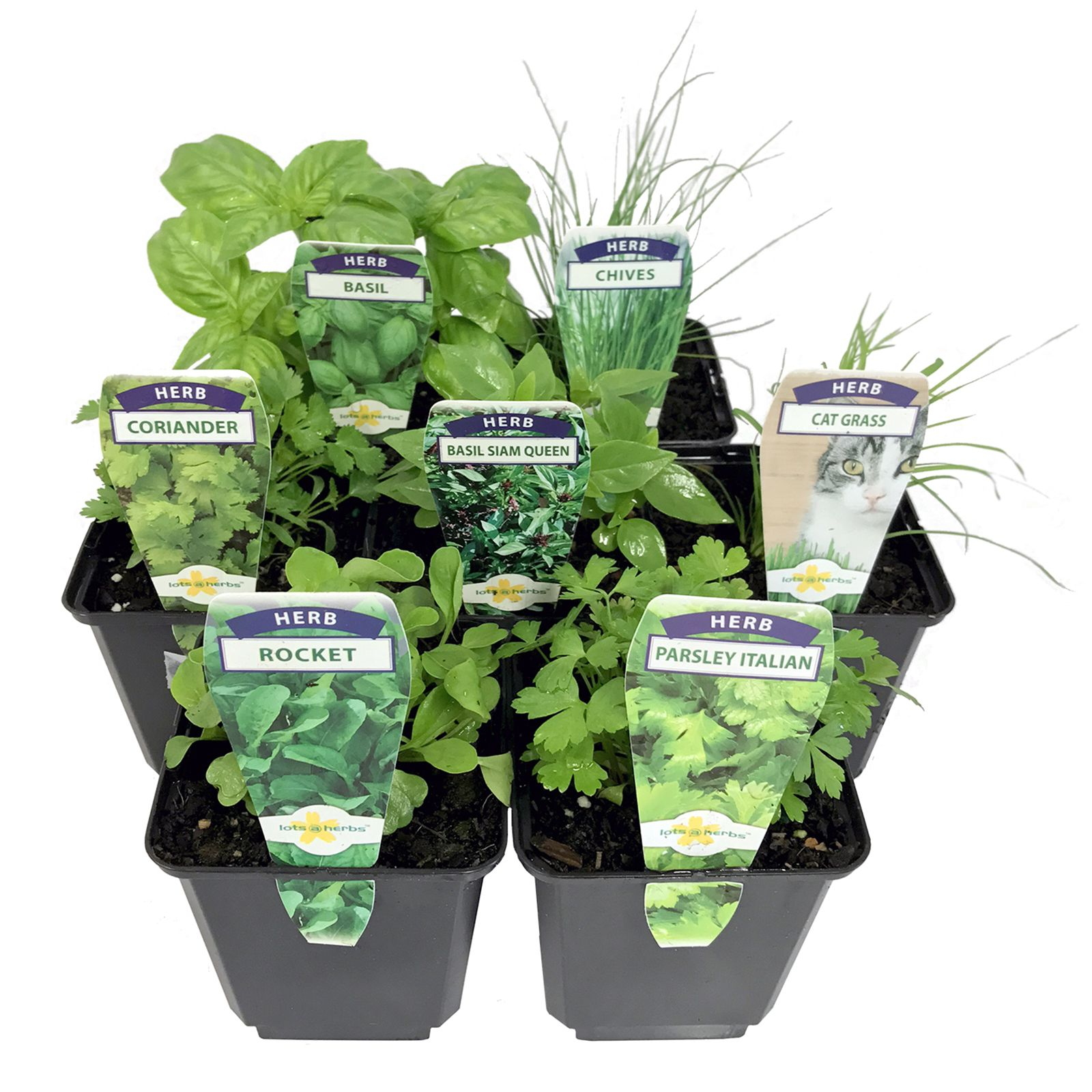 Find LotsAHerbs 100mm Assorted Herbs at Bunnings