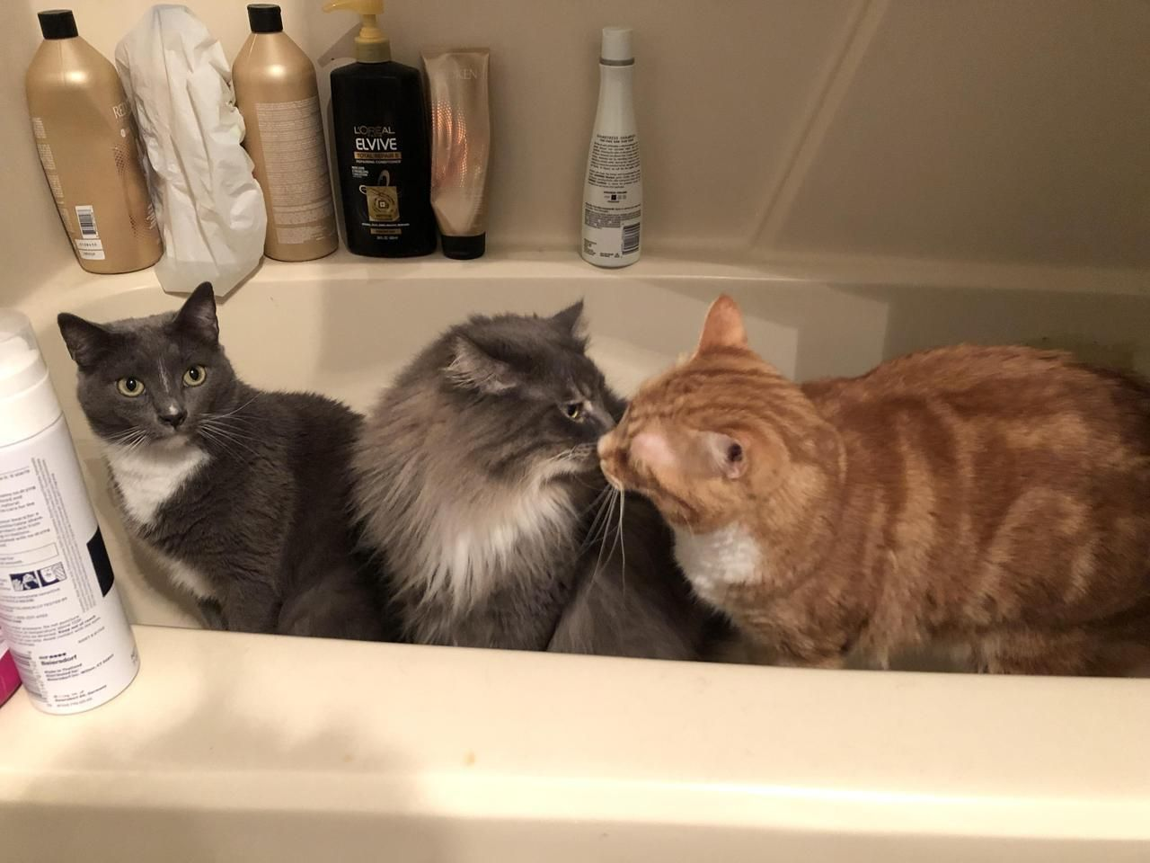 My Cats Are Plotting Something In My Bathtub By Catmccatpants What You Think About Cute Cats And Dogs Funny Cats And Dogs Kittens And Puppies