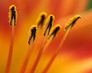Treating hay fever, nose allergy, vasomotor rhinitis, seasonal sneezing,  grass pollen,