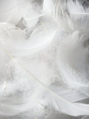 White Texture  - soft white feathers; natural inspiration