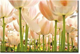 Resultado de imagen de mural tulipanes