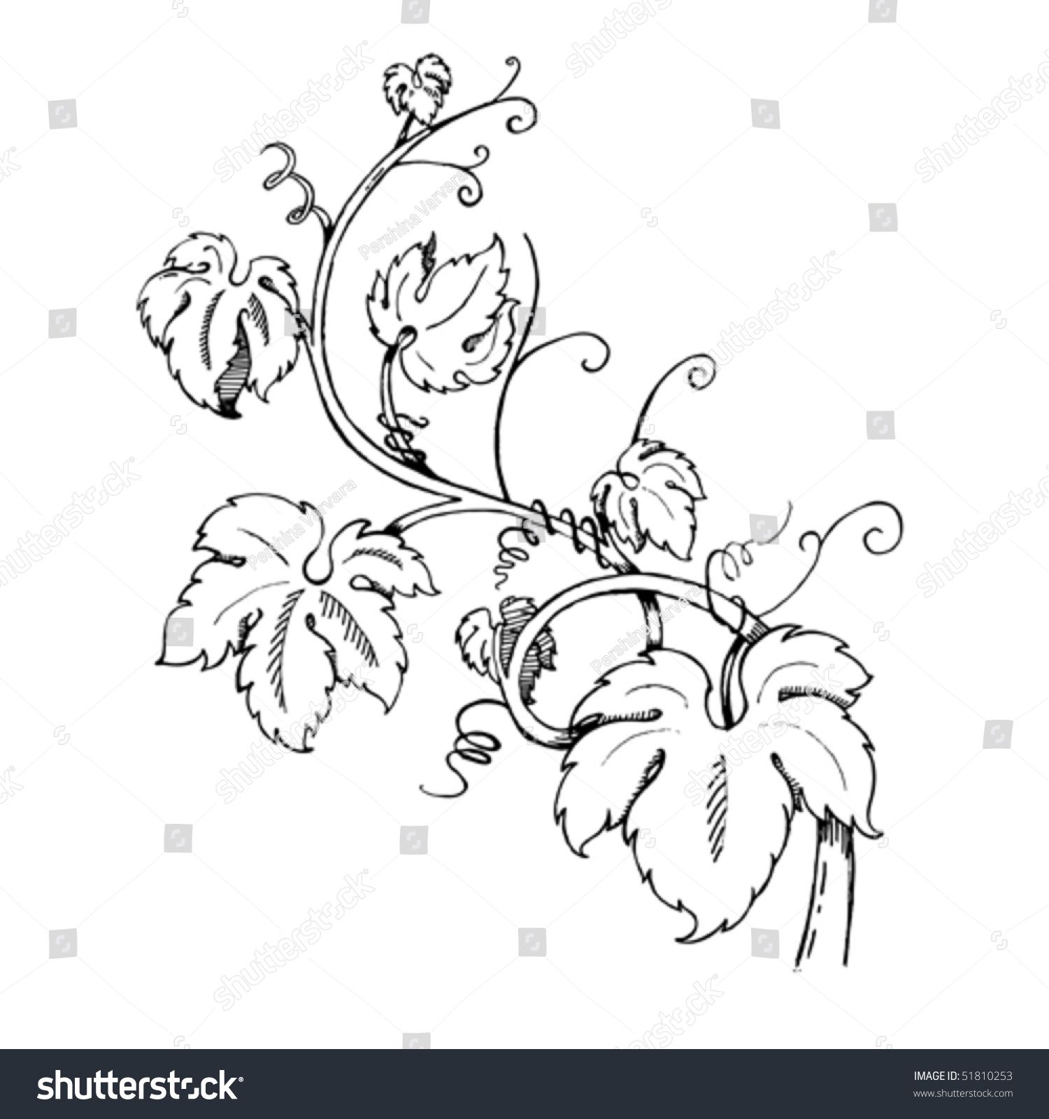 Pics For Grape Leaves Drawing Leaf Drawing Grapes Leaf Coloring