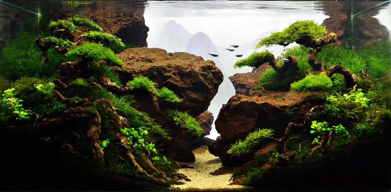 Aquascape Design planted tank jurang mayitherry rasio - aquarium design contest