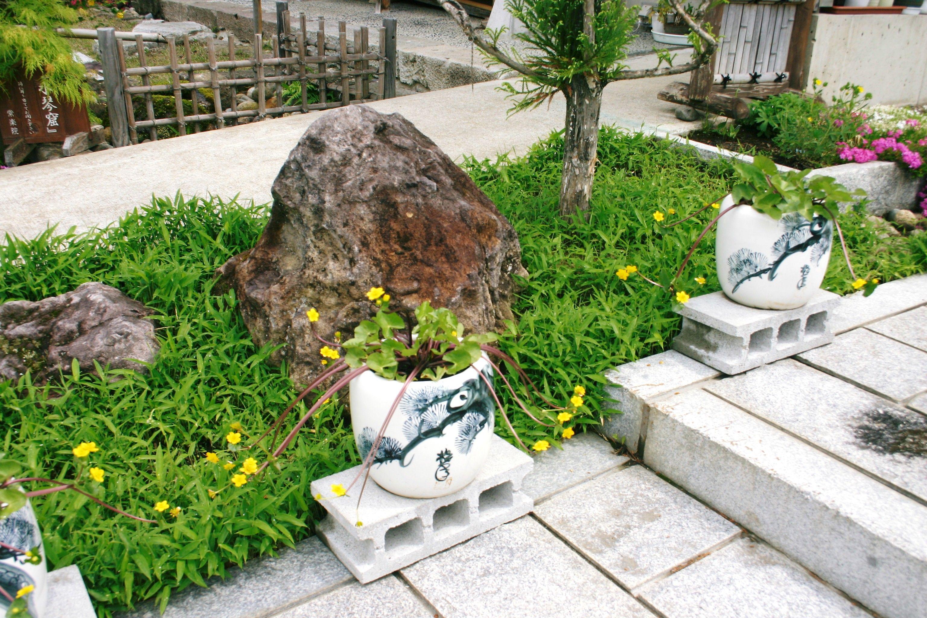 2011 June 火鉢に入れた立金花