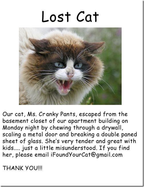 Disturbing And Funny Lost Cat Signs Cat Posters Lost Cat Funny Cat Faces