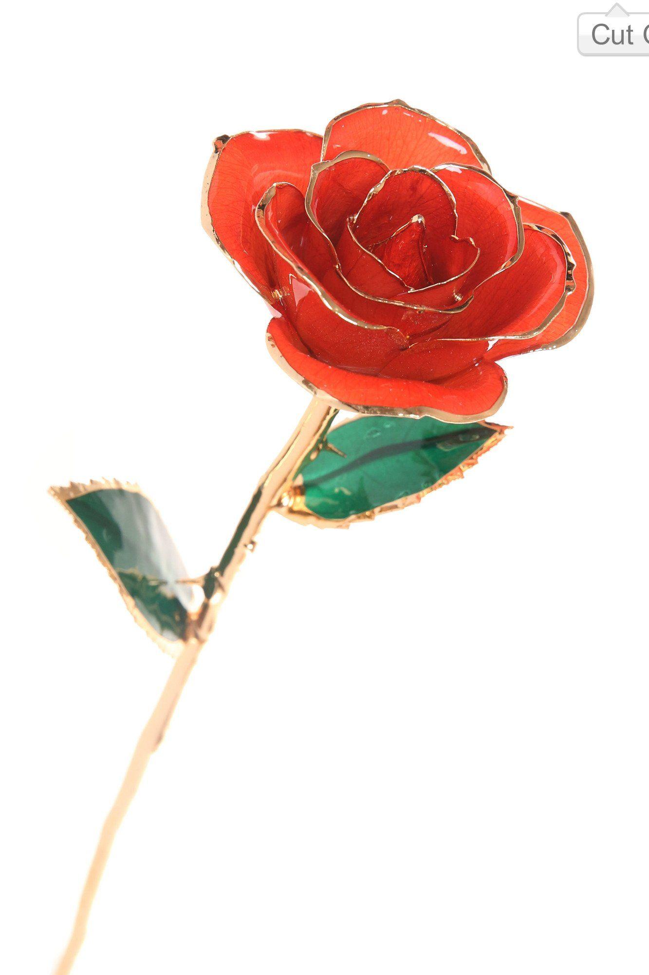 Durarose everlasting long stem red orange rose dipped in