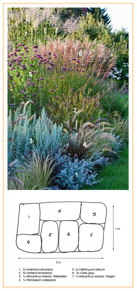 Ornamental grasses border 1 for Grasses for garden borders