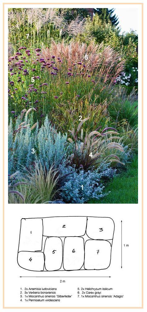 ornamental grasses border