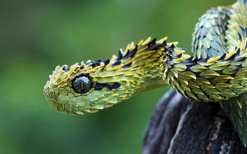 20 Bizarre Snakes That Will Creep You Out With Images Bizarre