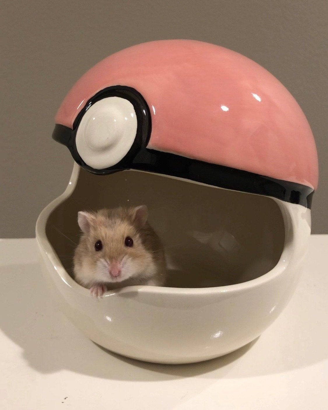 Pokemon Small Pet Hideout Etsy Small Pets Pets Cute Hamsters