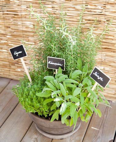 comment planter aromates