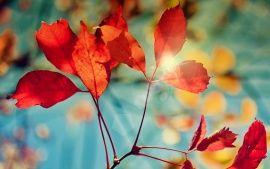 Wallpapers Hd Glare Of Autumn Fond Ecran Gratuit Fond Ecran S4 Wallpaper