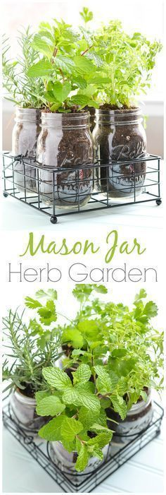 Do you love mason jars? Try this Mason Jar DIY Herb Garden. It looks great on the kitchen counter. #DIY #herbgarden #GrowingHerbGardenPots #diygarden