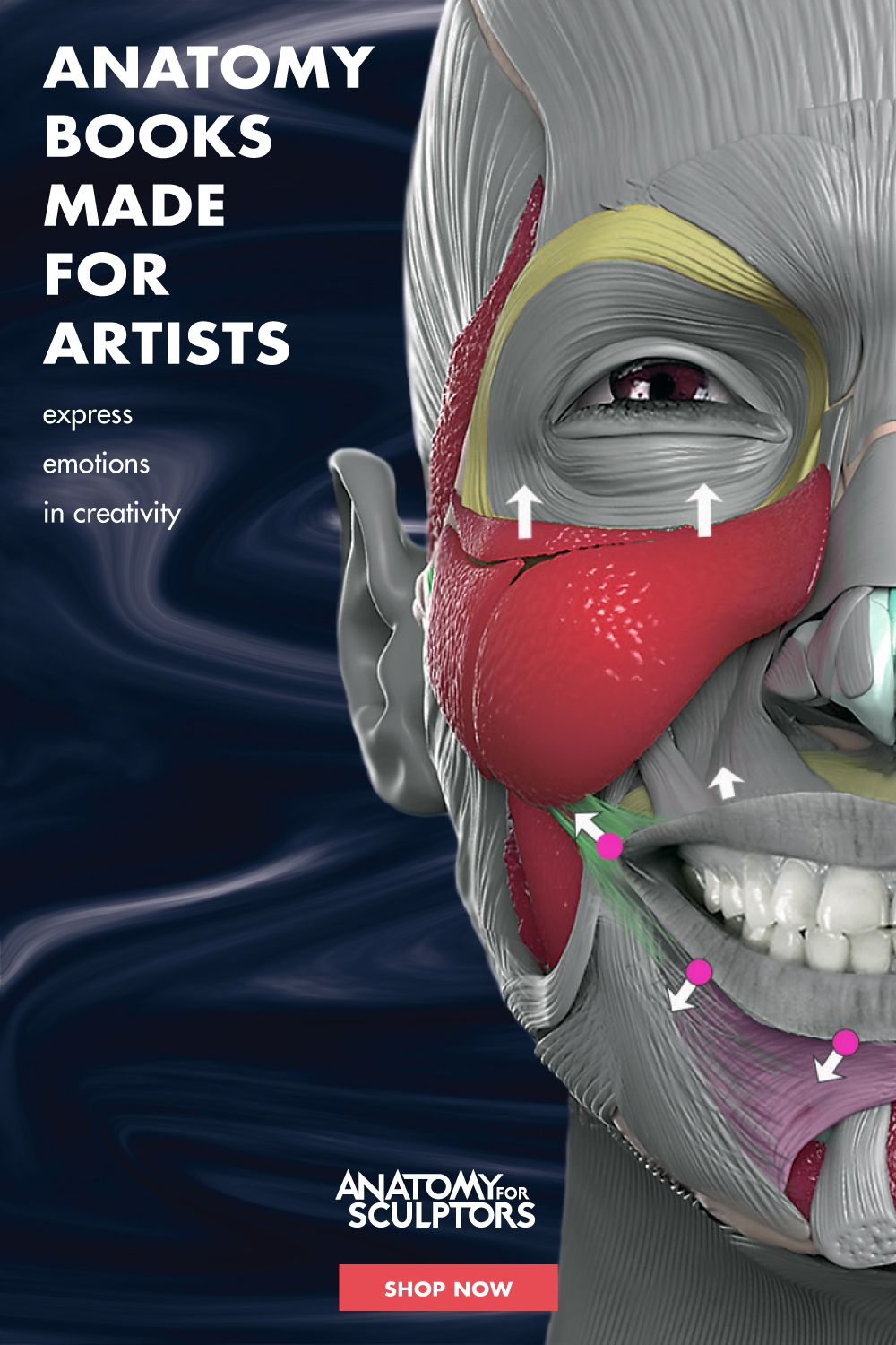 Anatomy of facial expressions in 2020 anatomy books for