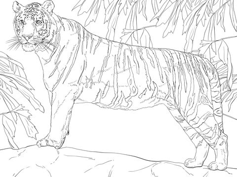 Standing Bengal Tiger Coloring Page From Tigers Category Select From 20946 Printable Crafts Of Cartoons Coloring Pages Animal Coloring Pages Cat Coloring Page