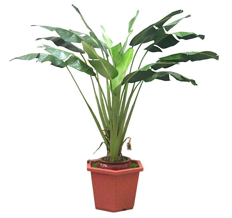 Free Plant Identification Artificial plants, Tropical plants