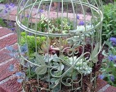succulents cage