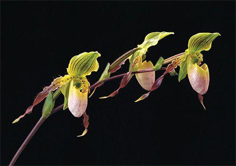 Pin Em Orchids Beauty