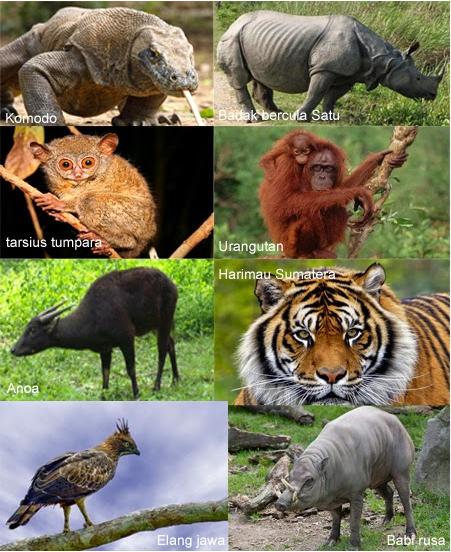 98 Gambar Binatang Yang Hampir Punah Terbaik