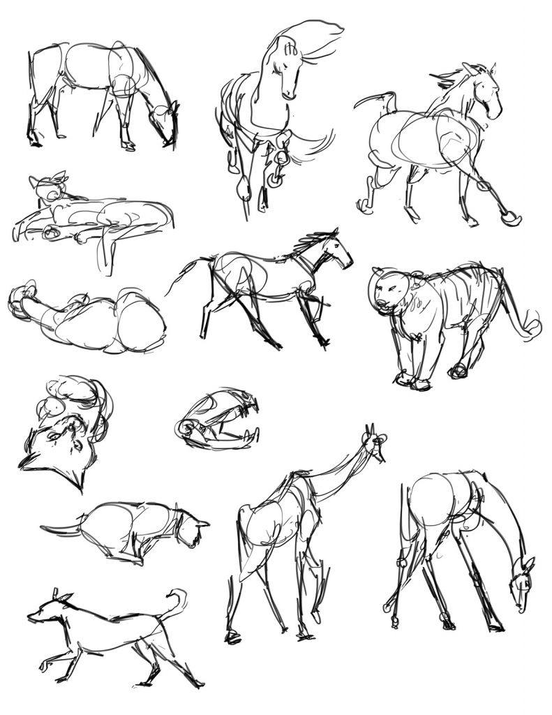 Animal gesture drawing casey hunt gesture drawing tool animals