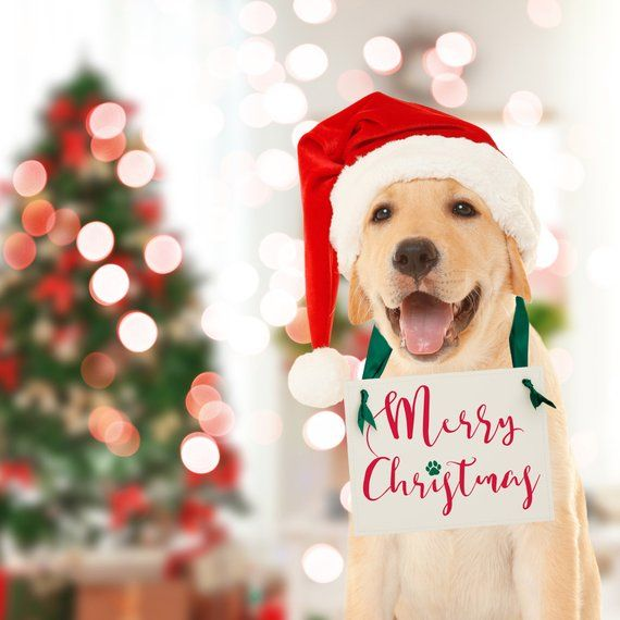 Christmas Puppy Surprise Sign Merry Christmas Dog Paw
