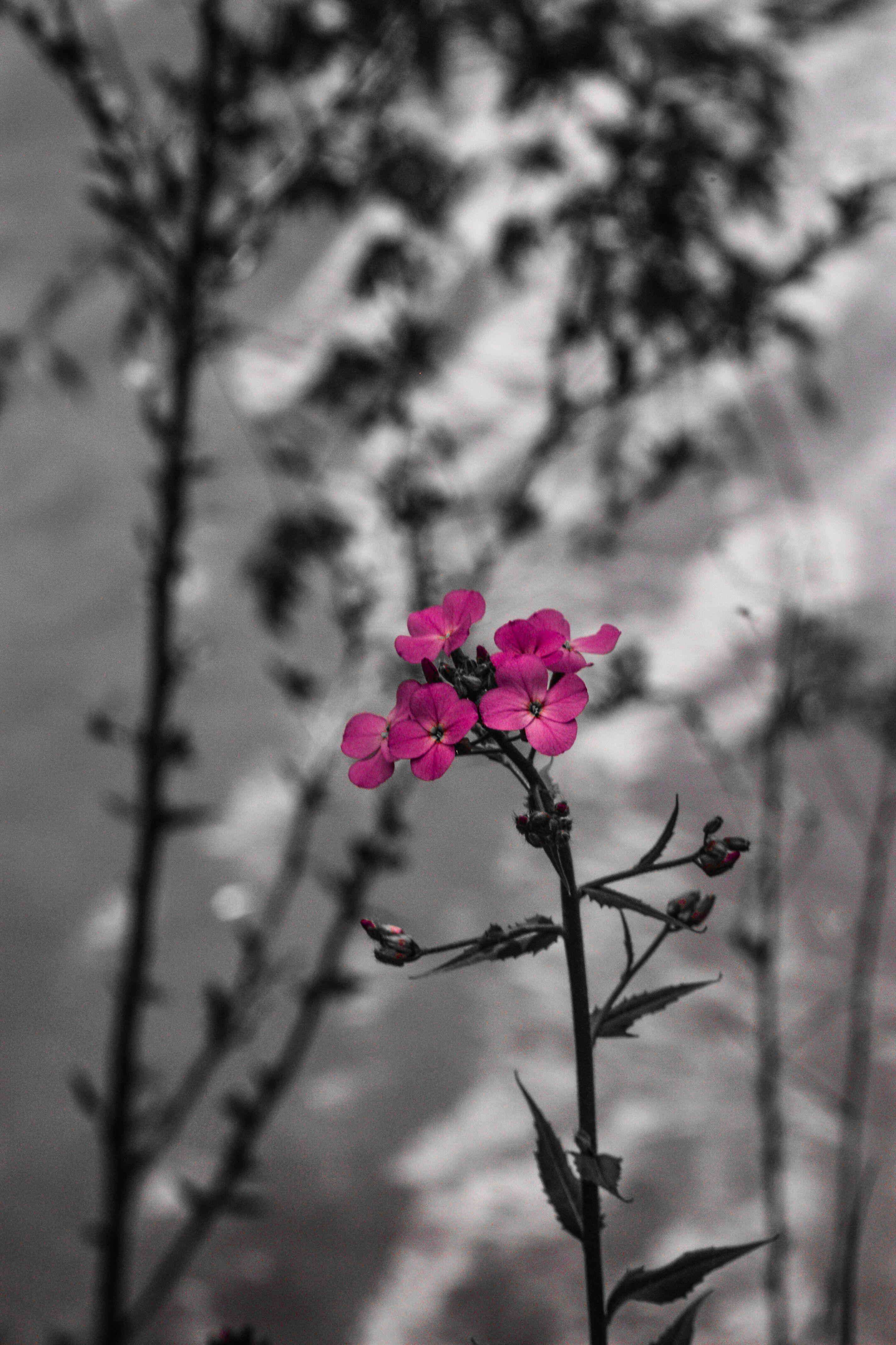 Explore Black White Pink Colour Splash And More