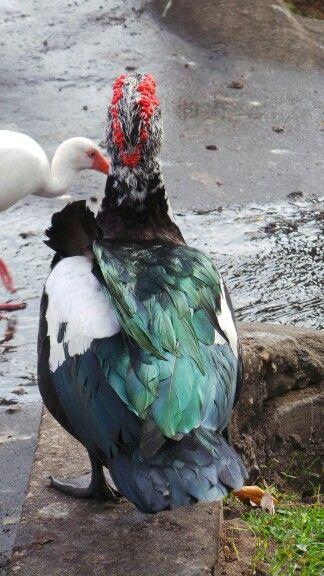 some type of duck through my camera lens pinterest animal