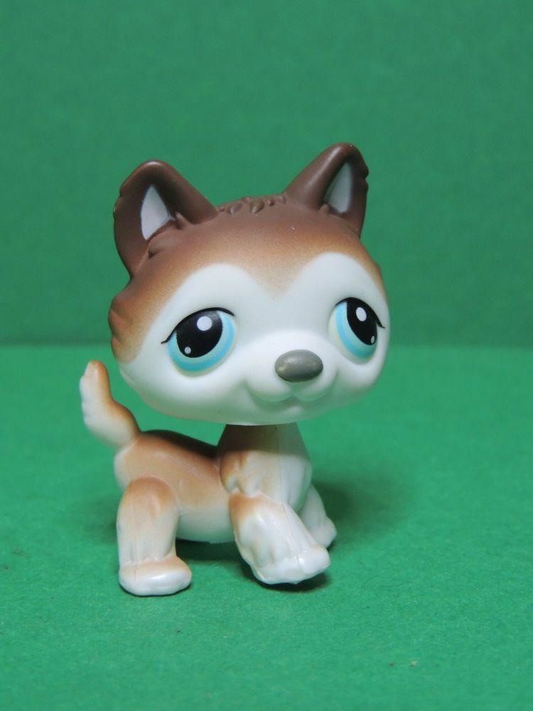 68 chien dog white brown husky blue eyes lps littlest - Chien pet shop ...
