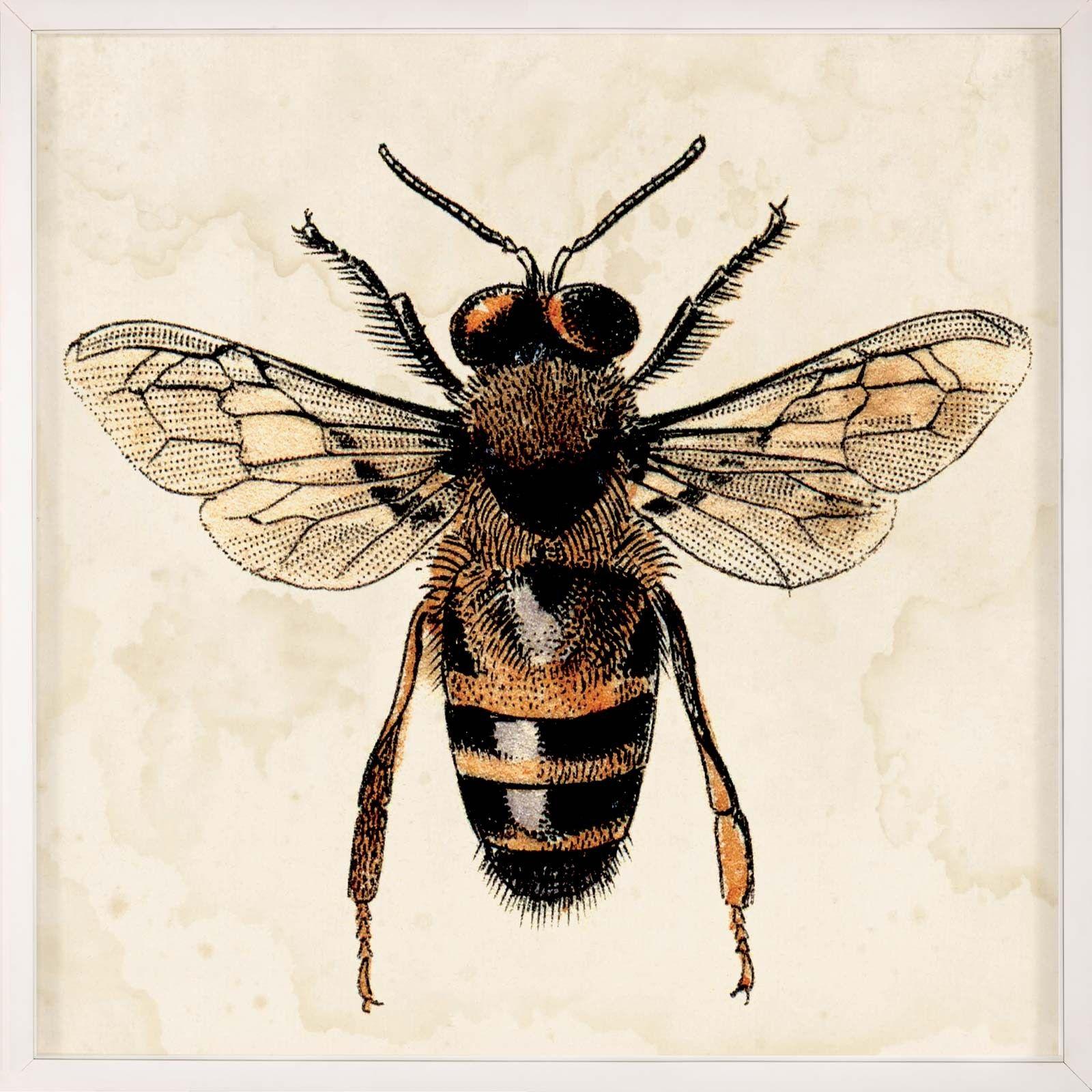 Lanoos Bee Study 1 Bee Art Drawings Sketches Realistic Drawings