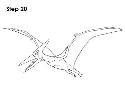 Draw Pteranodon Dinosaur 20 | draw | Pinterest | Drawings, Creatures ...