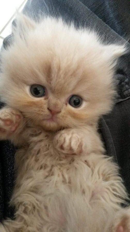 Tiny Tiny Cuteness 15th September 2014 Adorable kittens