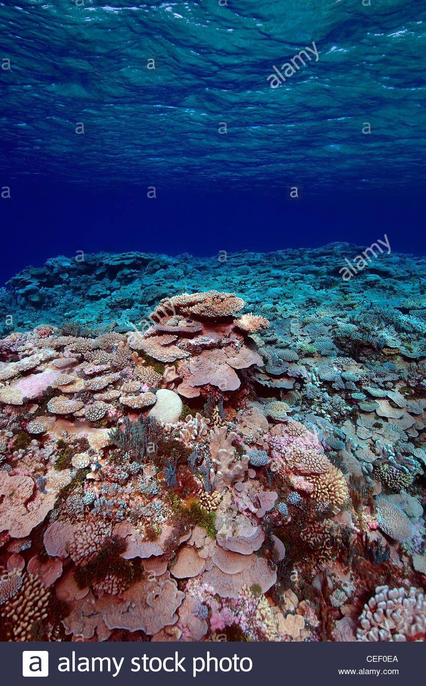 Ailinglaplap Atolón | ISLAS MARSHALL - OCEANIA | Pinterest