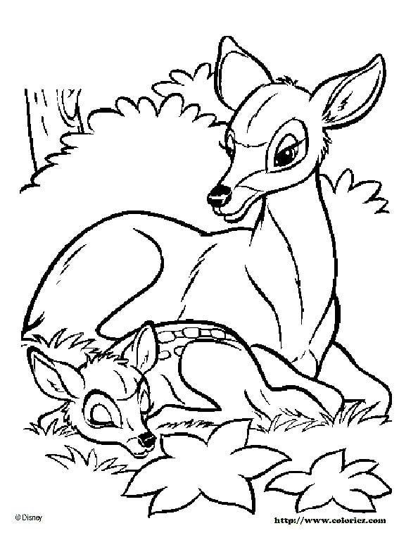 Pin von Lenka Hradilová - Smáhová auf Bambi | Pinterest