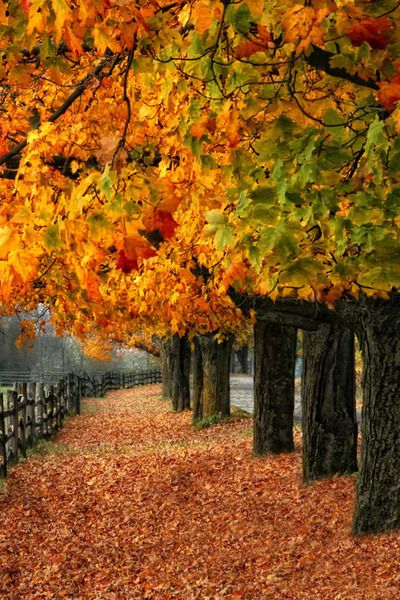 Fall in Lachute, Quebec, Canada