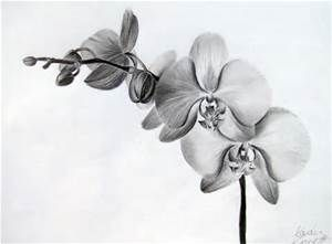 Realistic Orchid Drawing Bing Images Orquideas Dibujo Flores Para Dibujar Tatuajes De Flor Orquidea