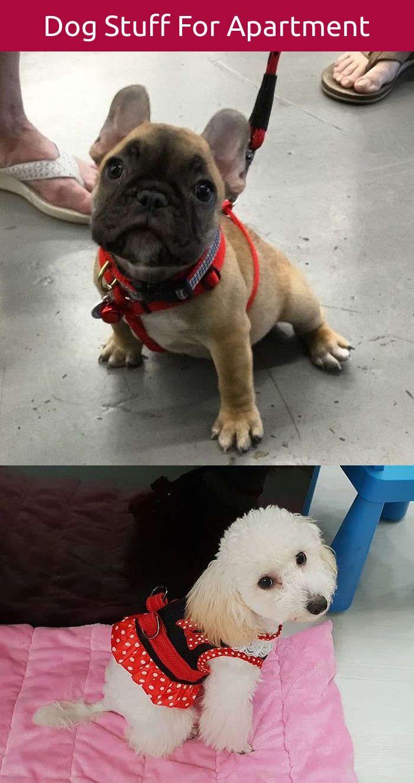 Dog diy shampoo training dogs stay pinterest dog and training dogs