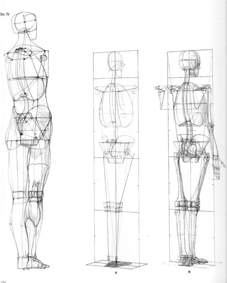 Pinterest Anatomy Body Proportions