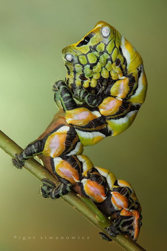 Insect Macro Photography by Igor Siwanowicz