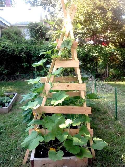 High Summer Reflections With Images Zucchini Trellis Diy