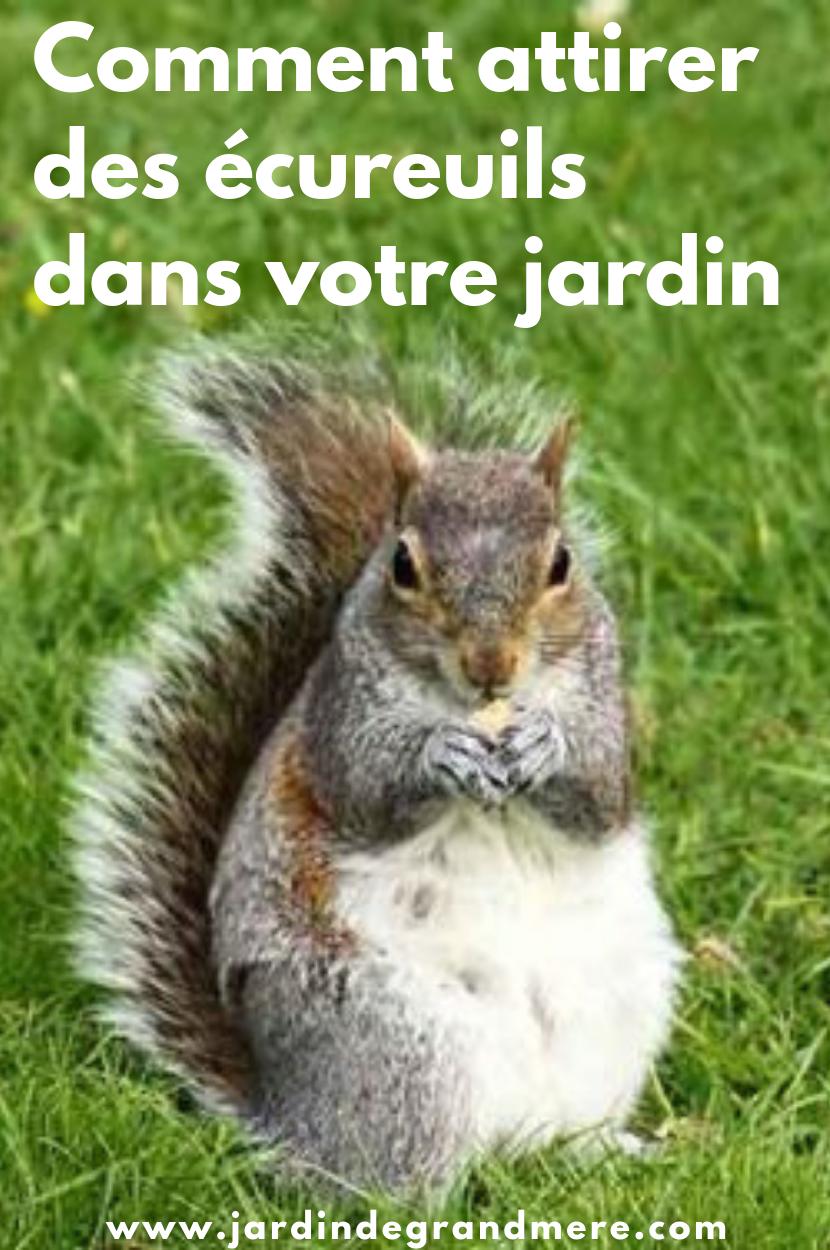 Comment Attirer Des Ecureuils Dans Votre Jardin Jardins