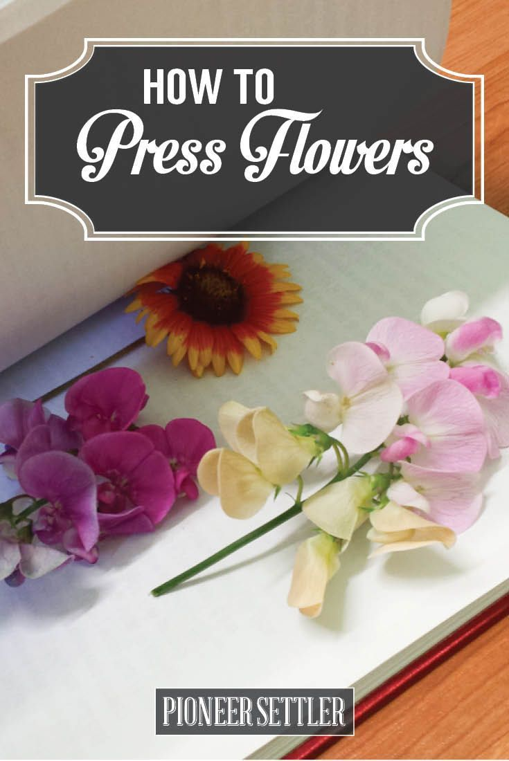 How To Press Flowers For Perfectly Dried Petals Diy Diy Diy Diy