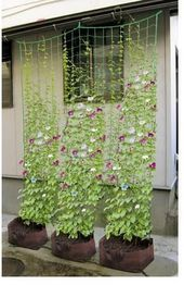 Climbing Petunia Flower Vines Informations About Climbing Petunia Flower Vines Pin You can easily use my profile to examine different pin types Climbing Petunia Flower Vi...